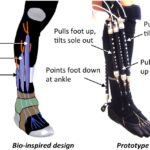 Bio-Inspired robotic device could aid ankle-foot rehabilitation